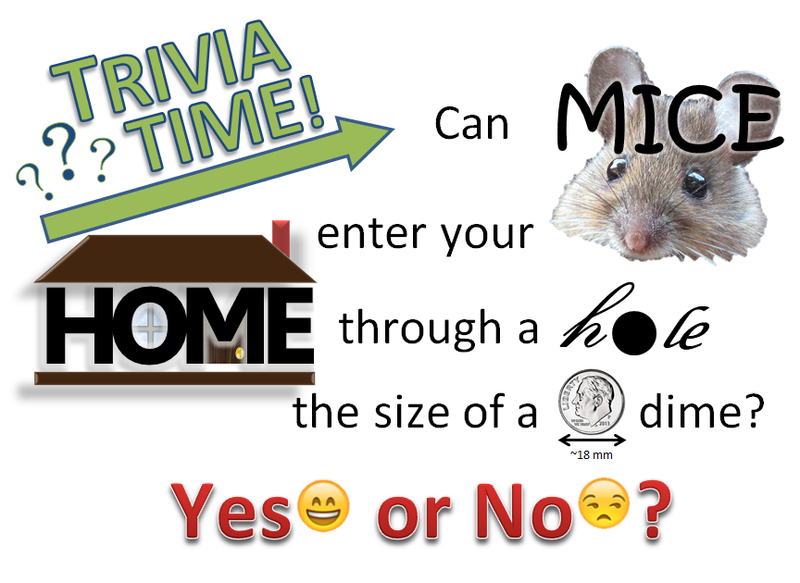 Mice Trivia