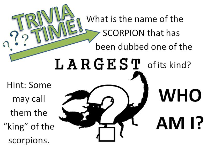 Scorpion Trivia